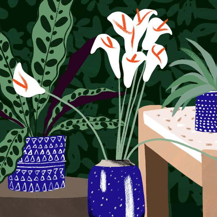 Table and plants illustration for CB2