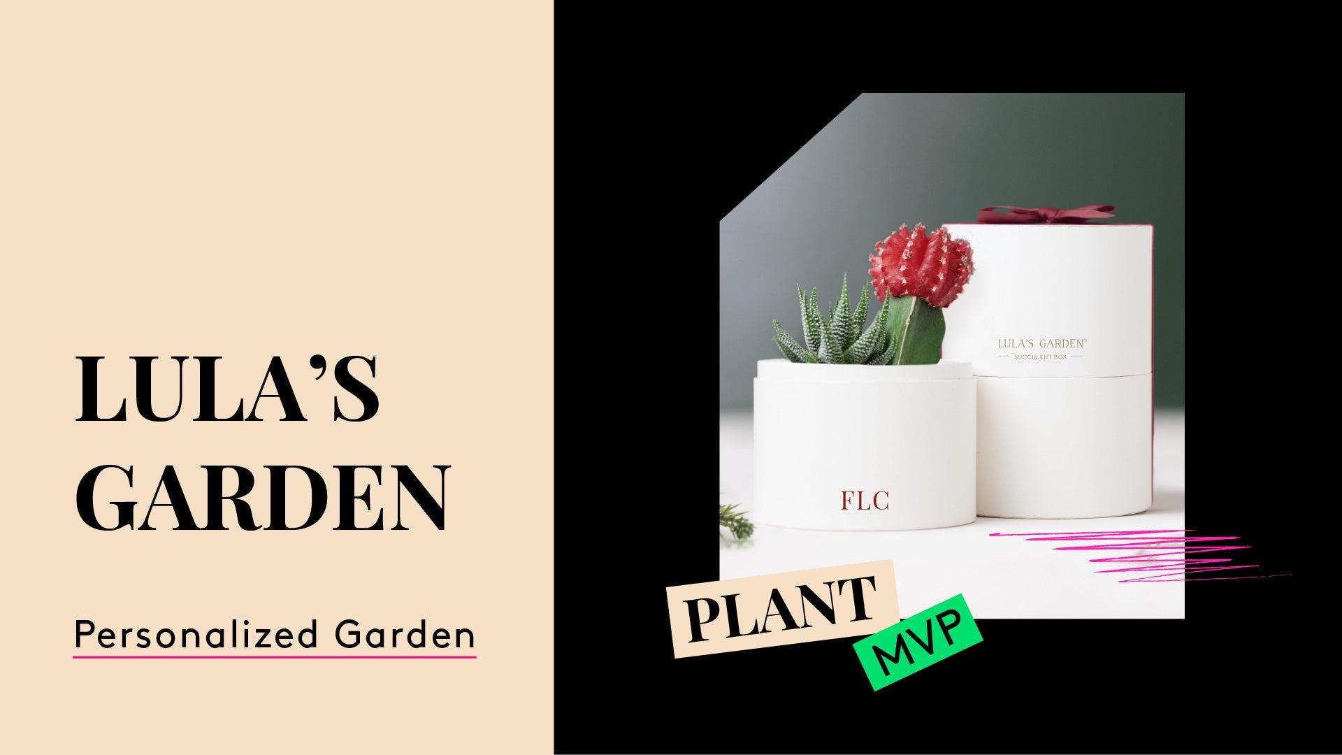 Plant MPV. A photo of a succulent. Lula's Garden.