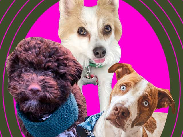 Three puppies on a hot pink and green backdrop.