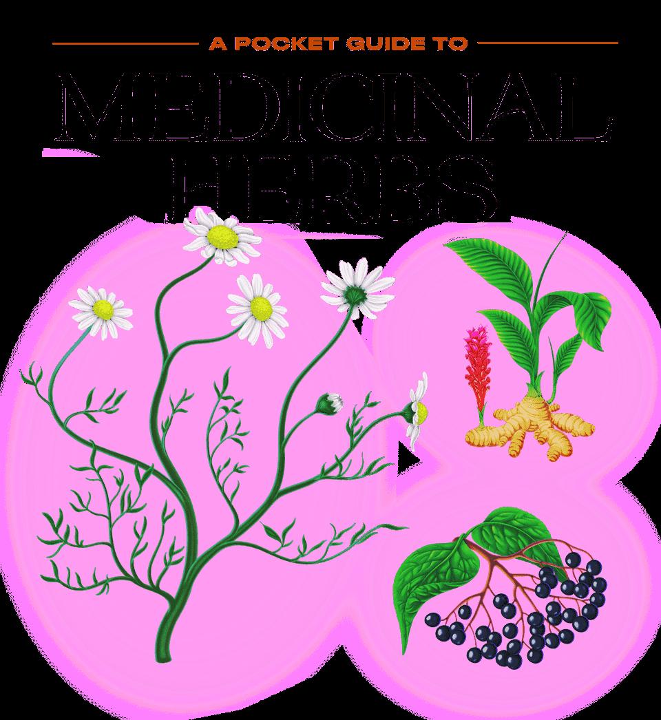A Pocket Guide to Medicinal Herbs