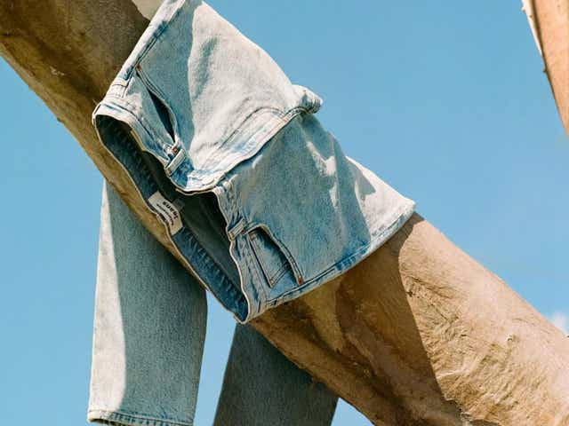 A pair of light jeans hanging on a tree in sunlight