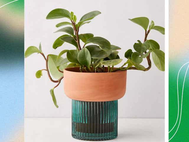 Self-watering ceramic and glass planter