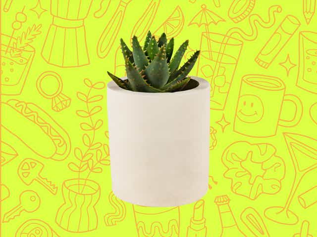 A succulent over a yellow background with orange line drawings of various objects Money Diarists purchase.