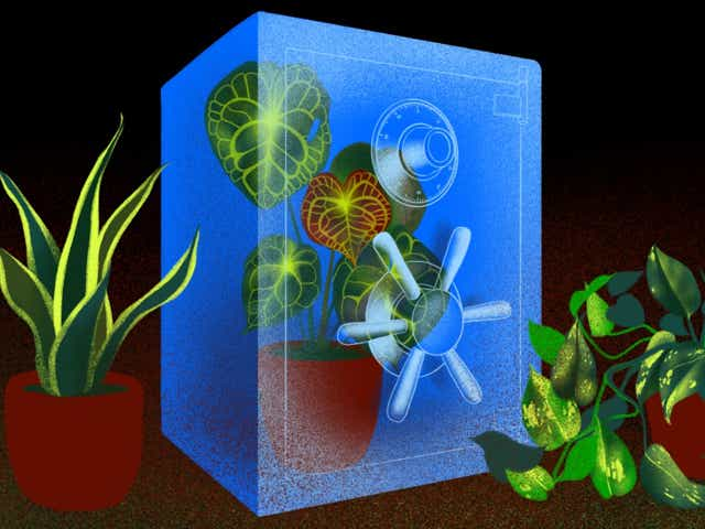 An illustration of a beautiful houseplant locked up in a safe