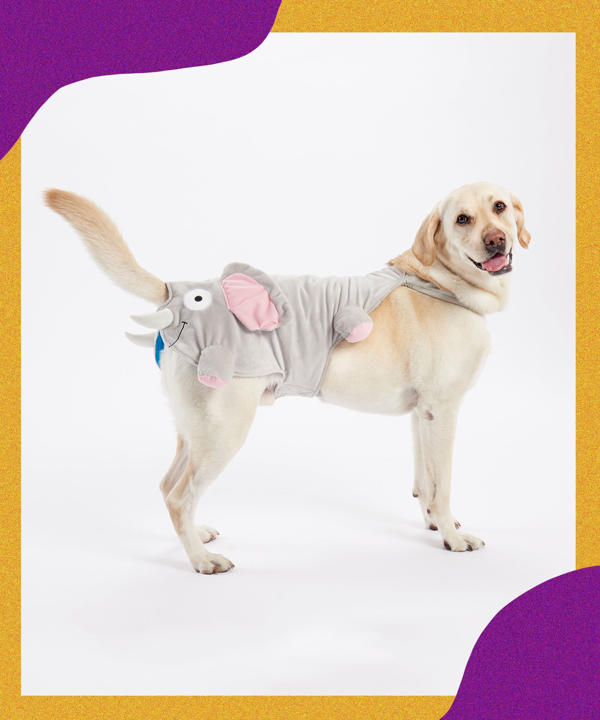 Dog Halloween Costumes So Cute That Your Pet Will Outshine You