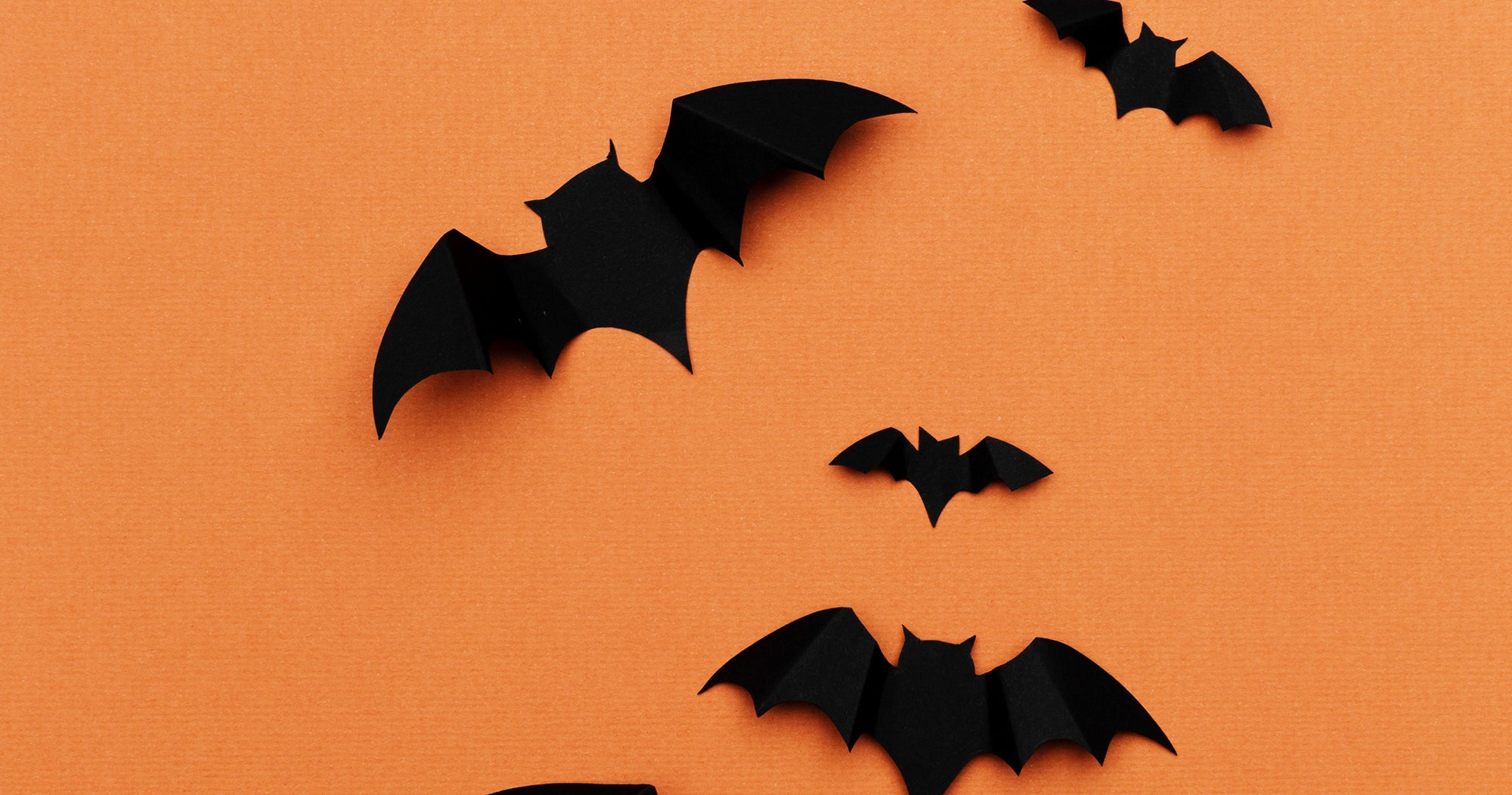 What Do Bats Have To Do With Halloween, Anyway?