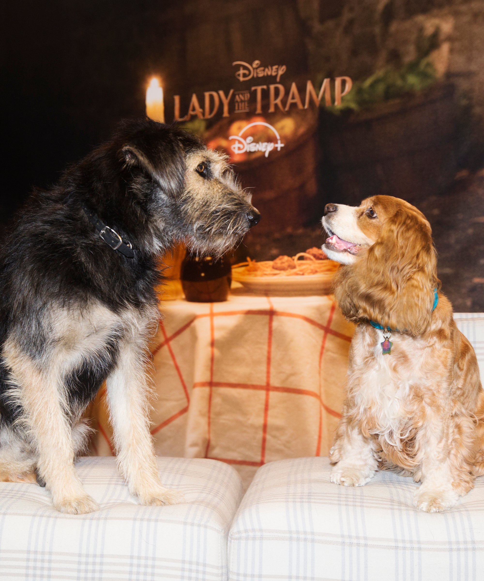 Tessa Thompson Justin Theroux Lady And The Tramp Dogs
