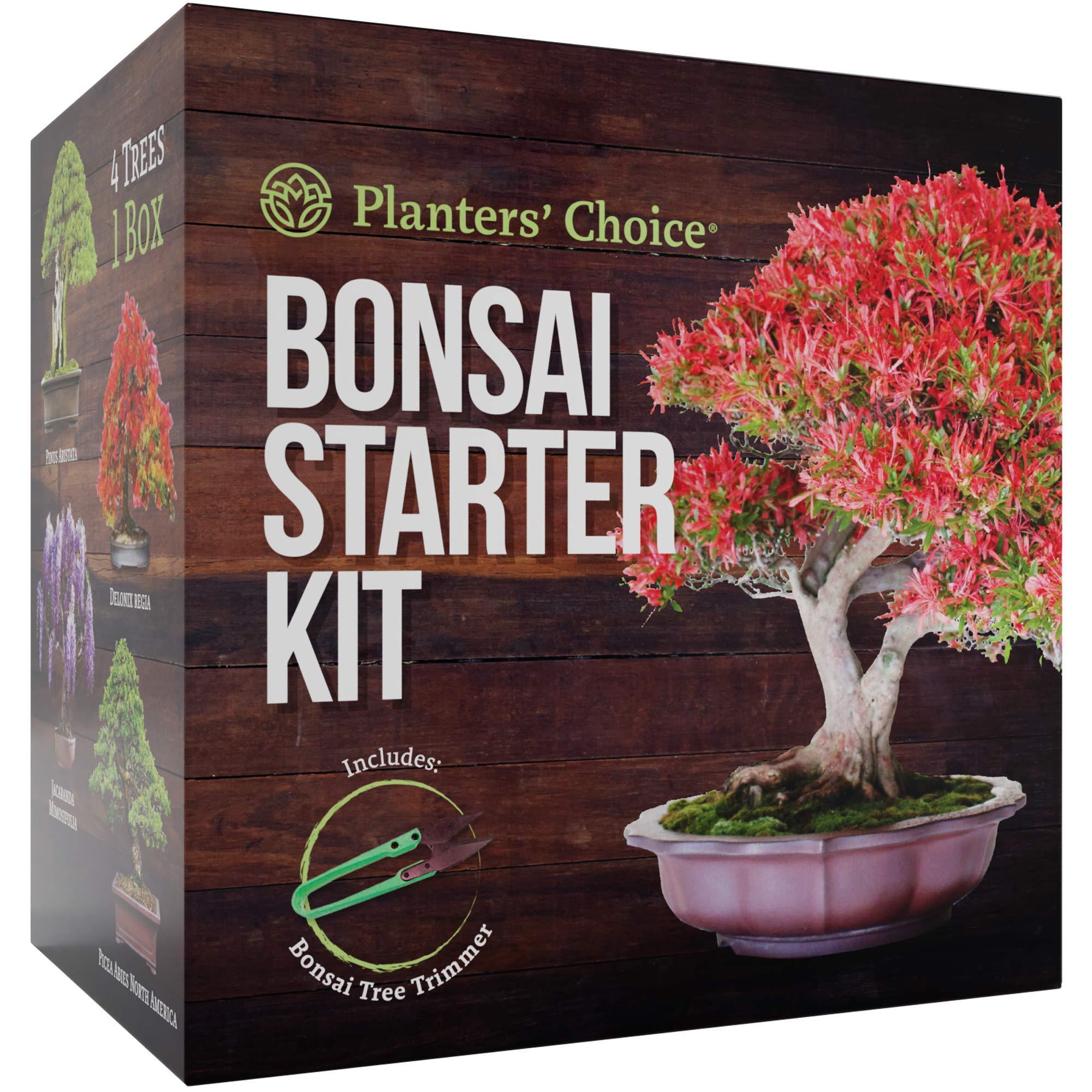 Bonsai Starter Kit The Complete Growing Kit
