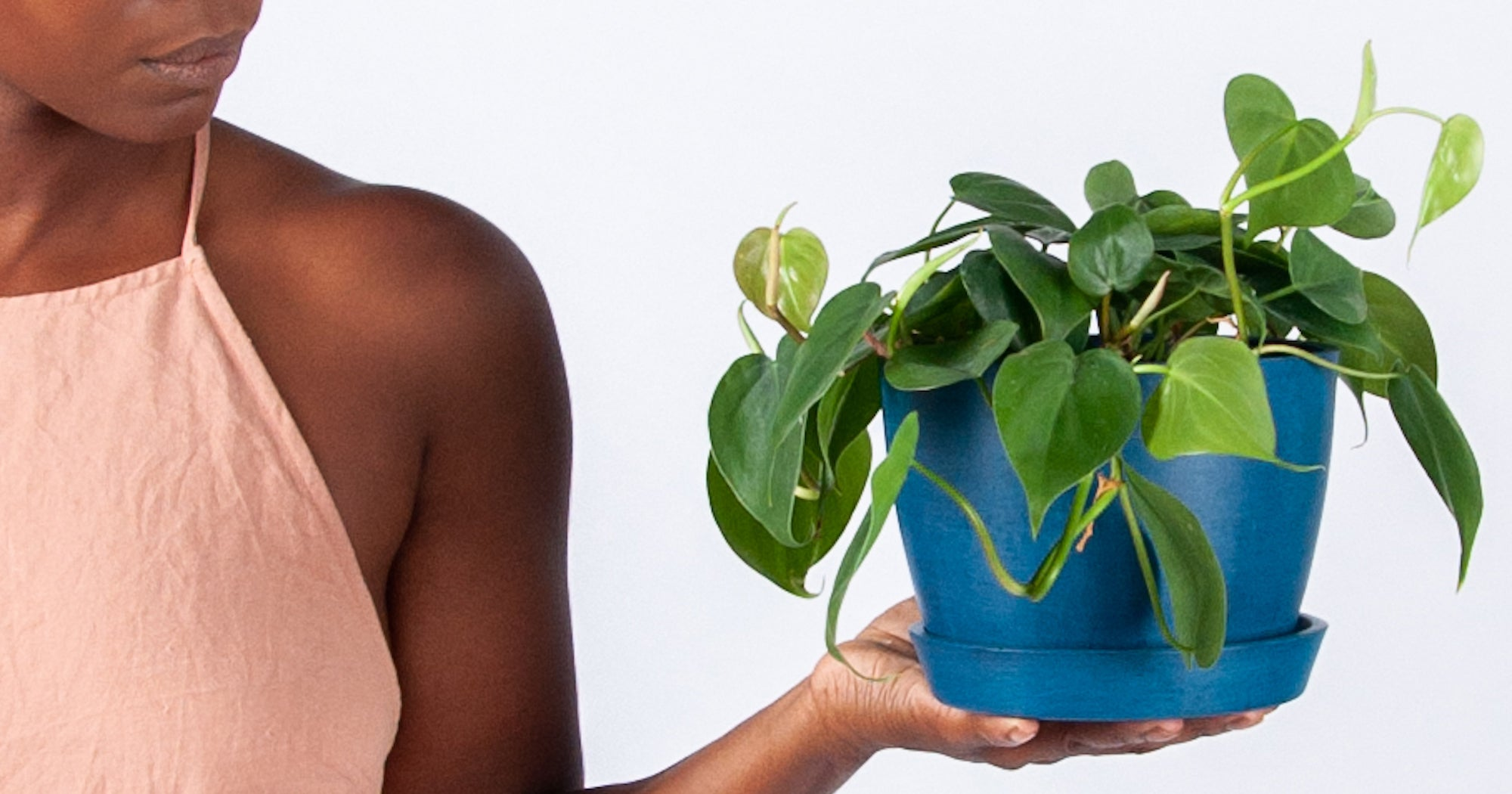 The Best Plants To Keep In Your Bathroom, According To An Expert