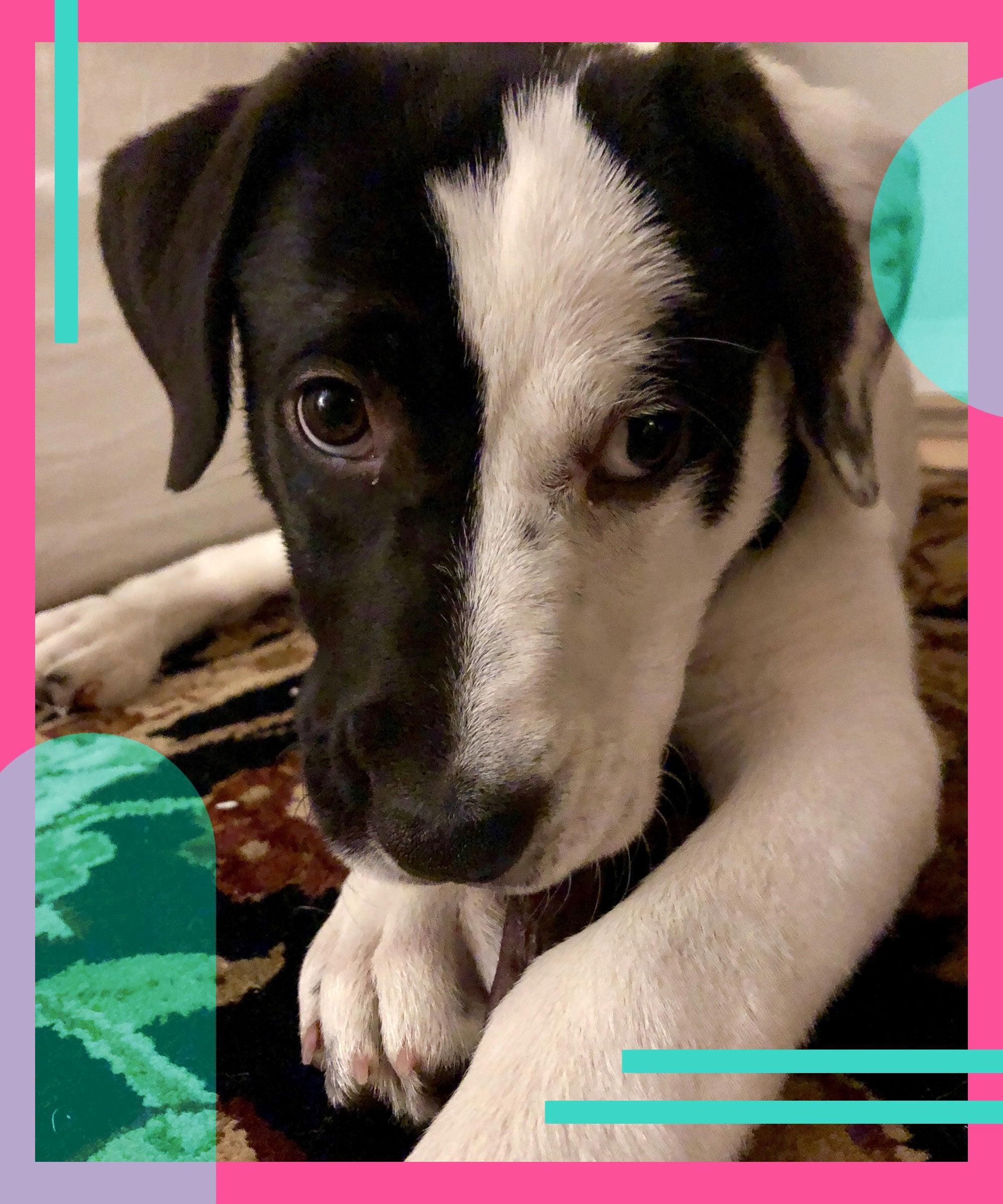 Why I Adopted A Dog During The Coronavirus Quarantine
