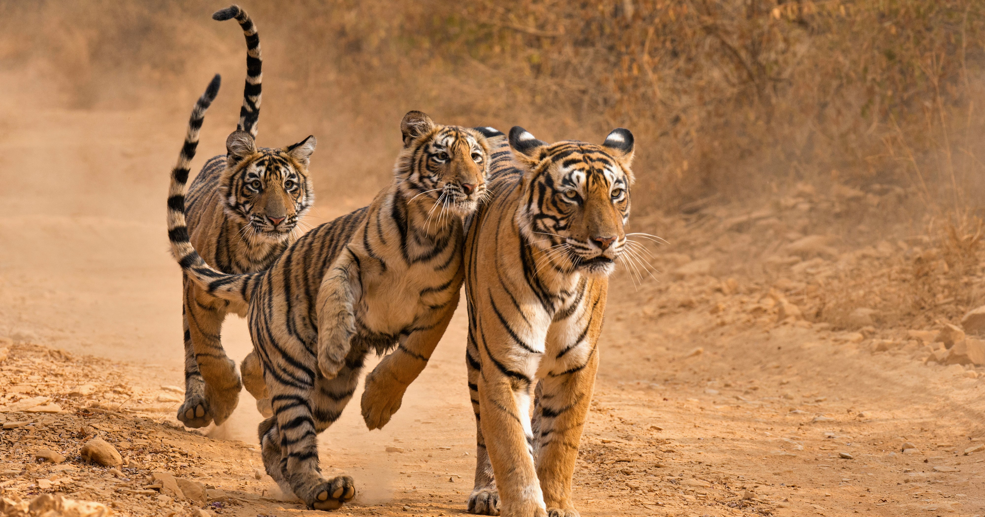 This Is The Question That Really Matters After 'Tiger King'