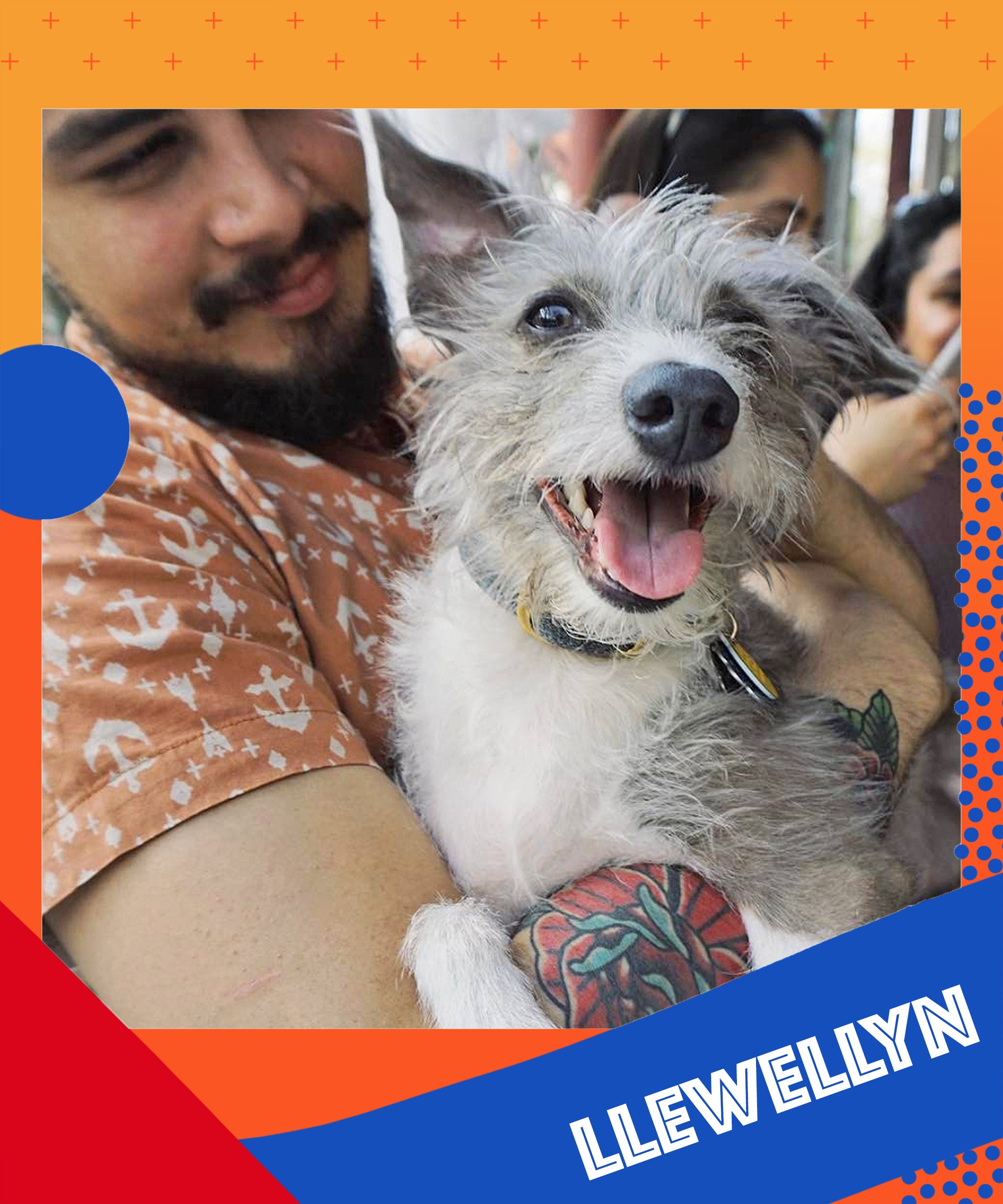 Meet Our Refinery29 Employee Pets Dogs Cats More