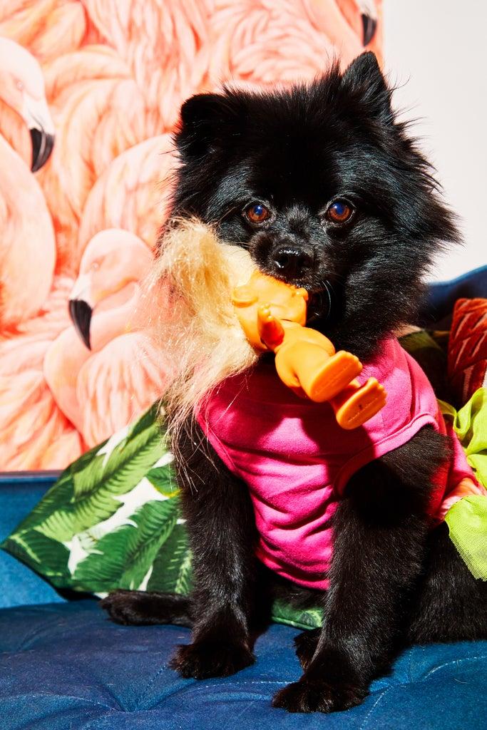 Gönn dir 5 Minuten Pause & schau dir diese putzigen Haustierfotos an