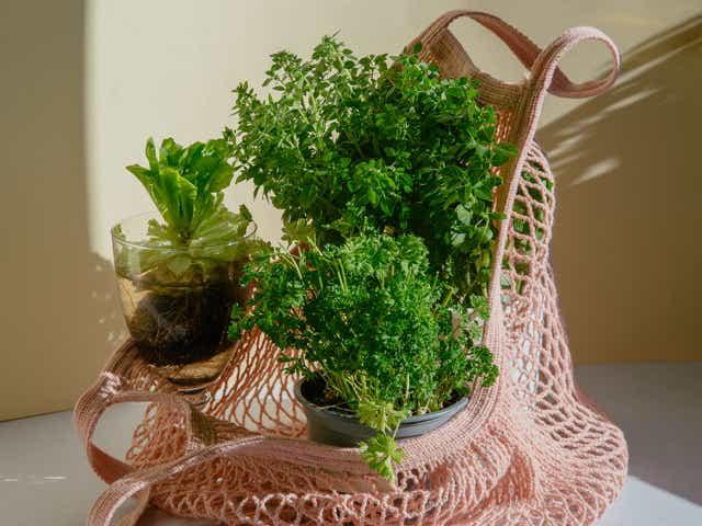 Supermarket herb plant in pale pink string bag